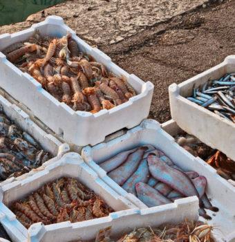 pescato di qualità